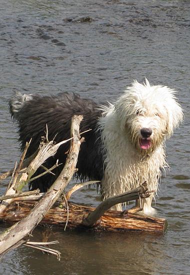 Jack having fun in the water